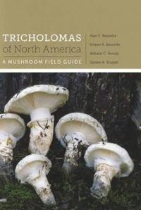 Tricholomas of North America