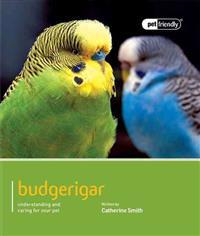 Budgerigar: Understanding and Caring for Your Pet