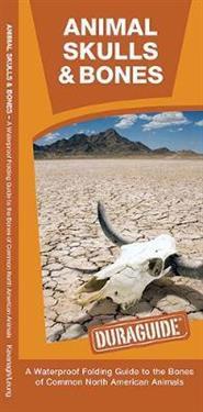 Animal Skulls & Bones