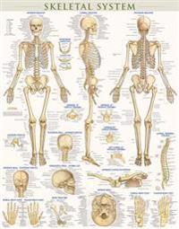 Skeletal System-Laminated