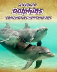 Pod of dolphins - and other sea mammal groups