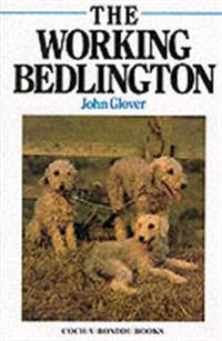 Working Bedlington