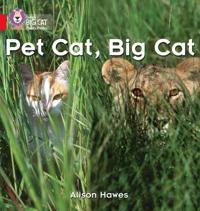 Pet Cat, Big Cat