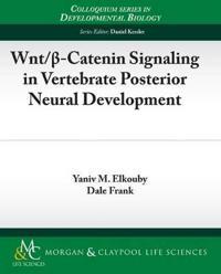 Wnt/B-Catenin Signaling in Vertebrate Posterior Neural Development