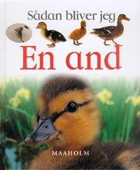Sådan bliver jeg en and