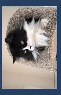 Mossy 2014 Weekly Calendar: A Week by Week Calendar with a Cover Photo of Black and White Cat from Ralphie's Retreat -A Pawsitive Alternative for