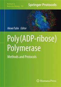 Poly Adp-ribose Polymerase