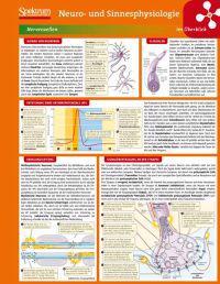 Neuro- Und Sinnesphysiologie Im Berblick