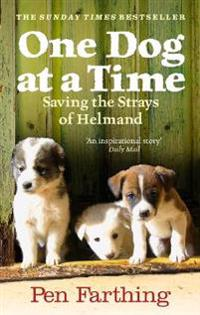 One dog at a time - saving the strays of helmand - an inspiring true story