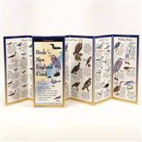 Birds of the New England Coast