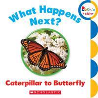 What Happens Next? Caterpillar to Butterfly