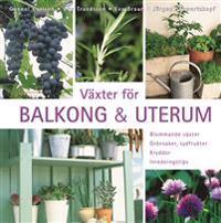 Växter för balkong & uterum : blommande växter, grönsaker, sydfrukter, kryddor, inredningstips