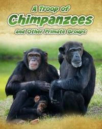 Troop of chimpanzees - and other primate groups