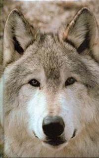 Wolf Blank Journal