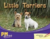 Little Terriers