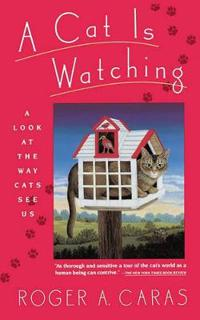 A Cat Is Watching