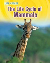 Life Cycle of Mammals