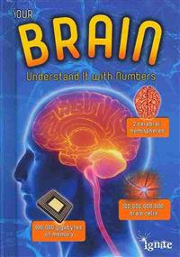 Your Brain: Understand It with Numbers