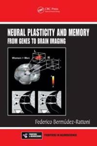 Neural Plasticity And Memory